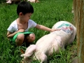 tattooed-pigs-3