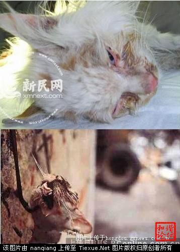Chinese Delicacies: Cats!? » CHINALERT
