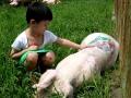 tattooed-pigs-3